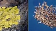 Biodiversity_Lichens980