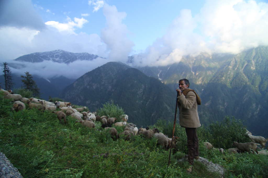 Shepard with his goats in GHNP (Click to enlarge)
