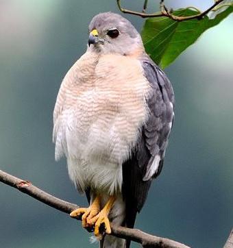 bird450