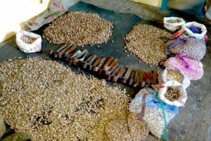 Seizure of Van lassan (Wild garlic) in GHNP