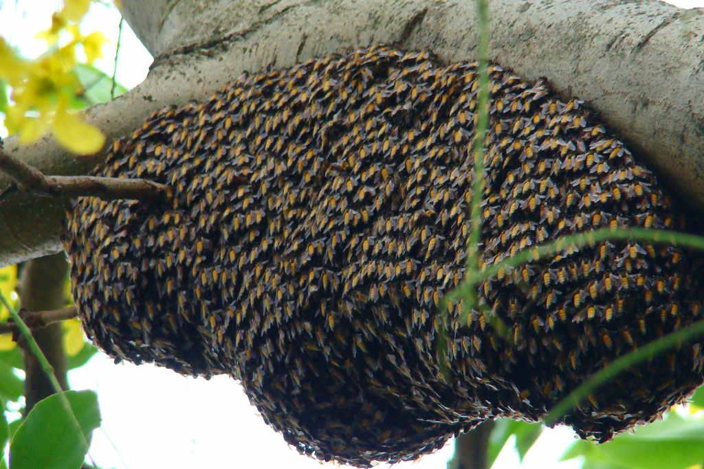 Honey comb.1024